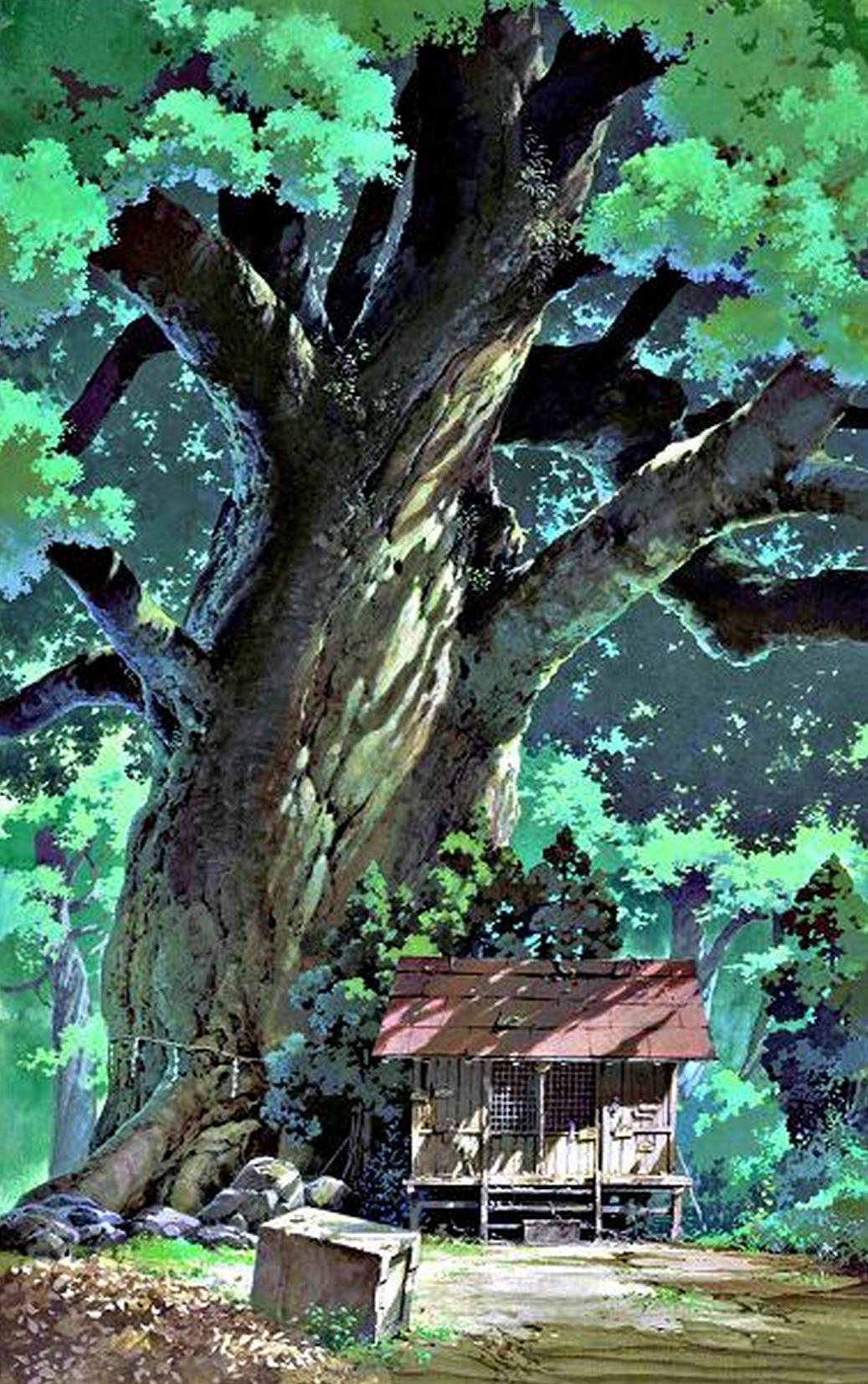 The Spirit of a Tree – The Camphor Tree・クスノキ (楠