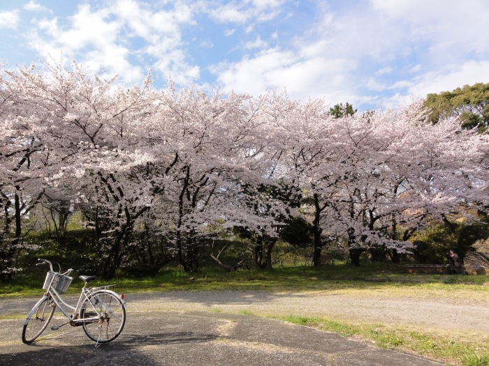 On the move March 19, 2015 chris.b A picture taken in the vicinity of Nagoya Castle, Aichi Prefecture. The bike abandoned in the front, a photographer taking aim in the shade of the cherry trees in the background. All this on a sunny day. One of my personal favorites.
