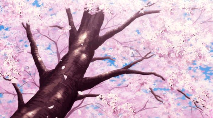 Sakura Zaka